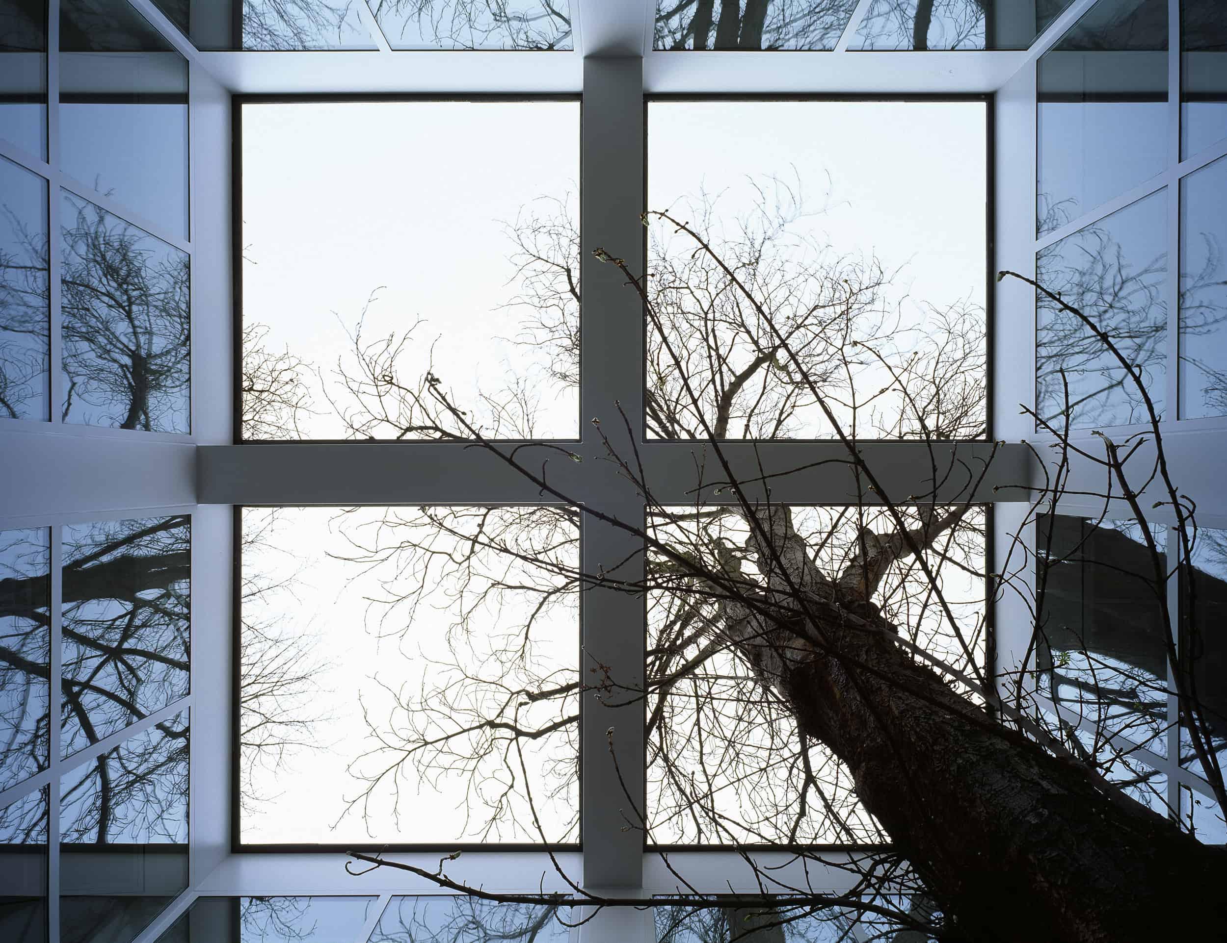 Innenhof mit altem Baum \ Foto: DAM