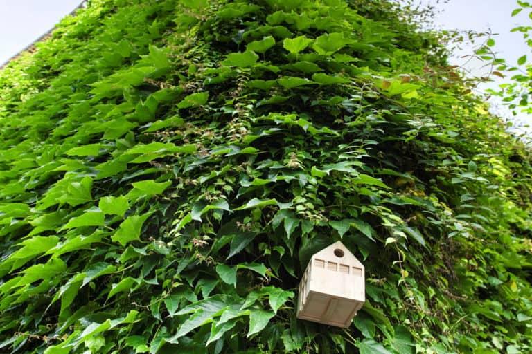 Einfach Grün Talk: Gebäudegrün fordern und fördern