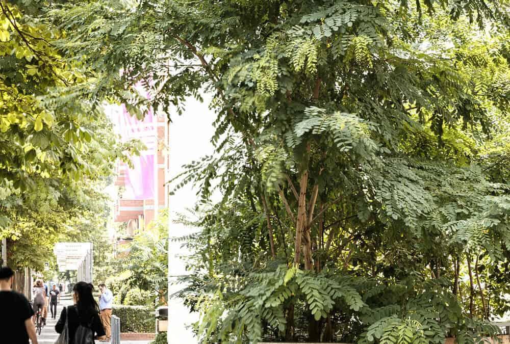 Urban Green #1: Grün machen – Plätze, Fassaden, Straßen